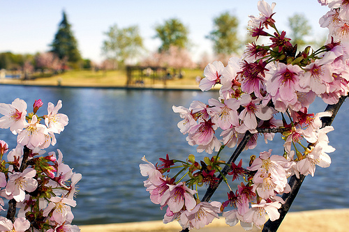 lake_balboa.jpg