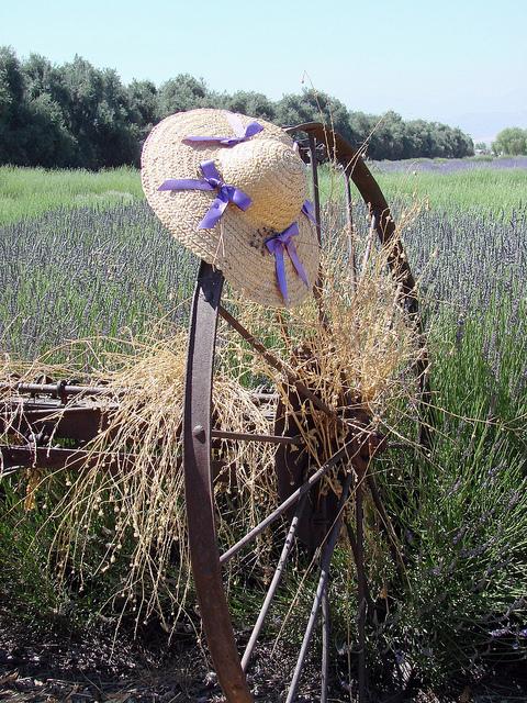 lavendar_festival.jpg