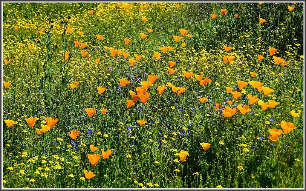 wild-flowers.jpg