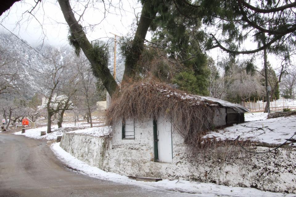 snowline-orchards.jpg