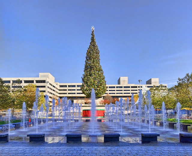 crown-center-tree.jpg