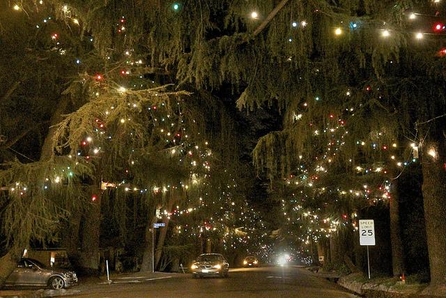 altadena_christmas_tree.jpg