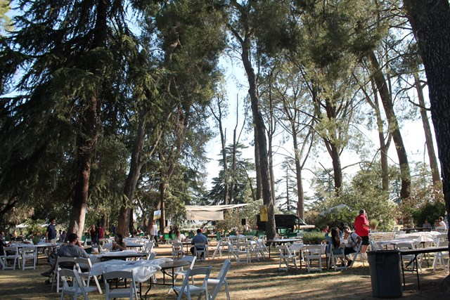 lavendar-festival1.jpg