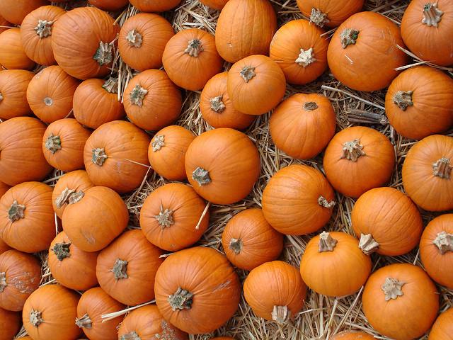 MrBonesPumpkinPatch.jpg