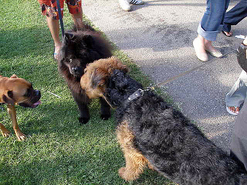 doggies-festival.jpg