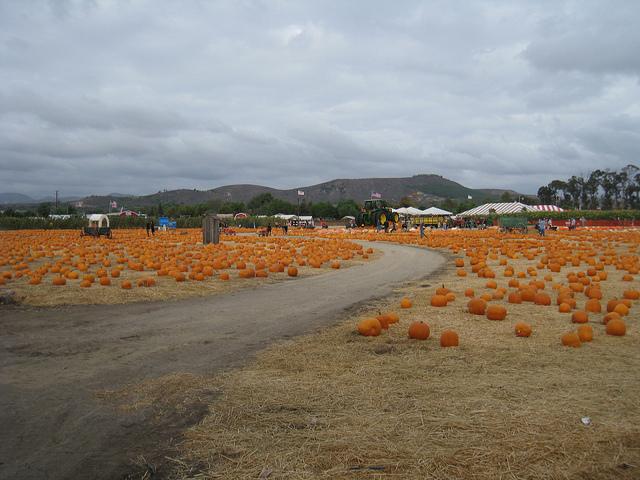 moorpark-pumpkins.jpg