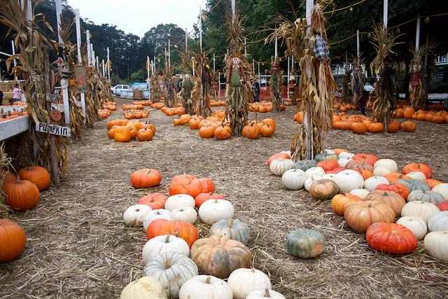 san-francisco-pumpkin.jpg