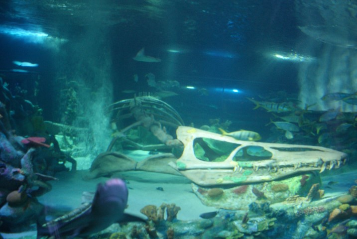 sealife_arizona6.JPG