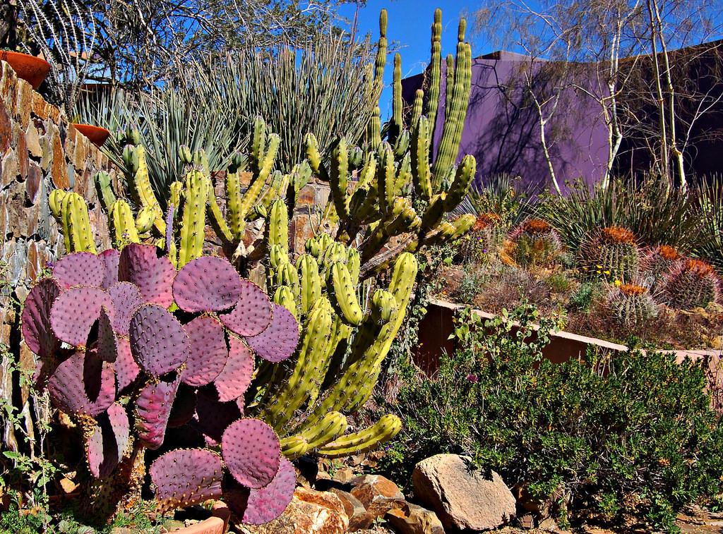 ArizonaSonoraDesertMuseum.jpg