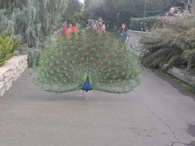 arboretum15.jpg
