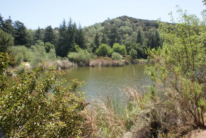 franklin-canyon-park1.JPG