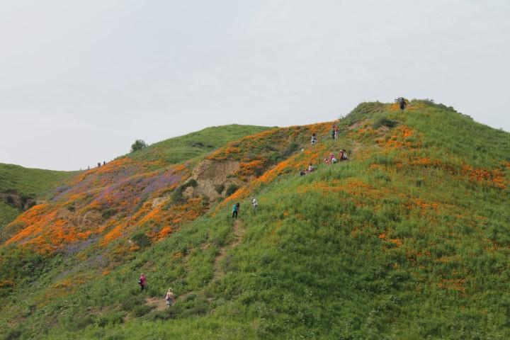 Chino-Hills-State-Park2.JPG