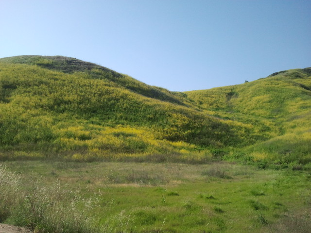 Chino hills state park - Towne place at garden state park ...