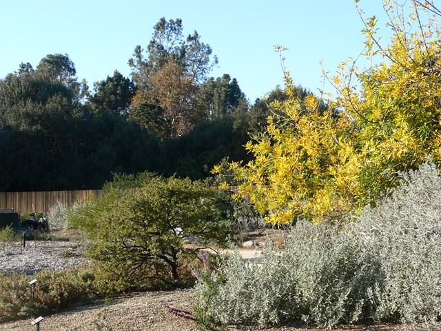 santa-ana-botanical-garden2.jpg