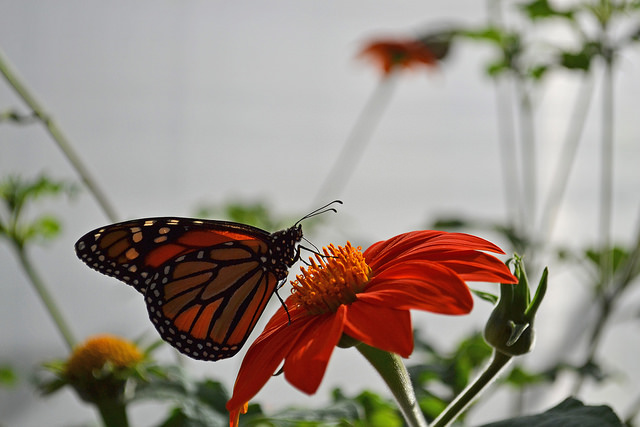 butterfly-farms.jpg