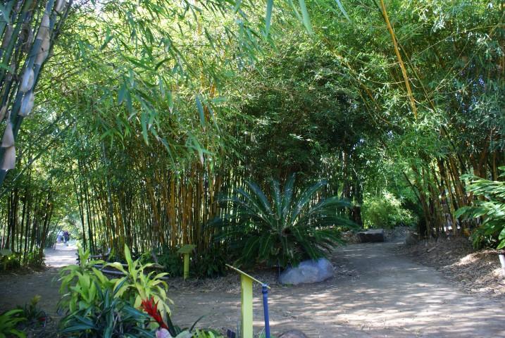 san_diego_botanc_garden_13.JPG
