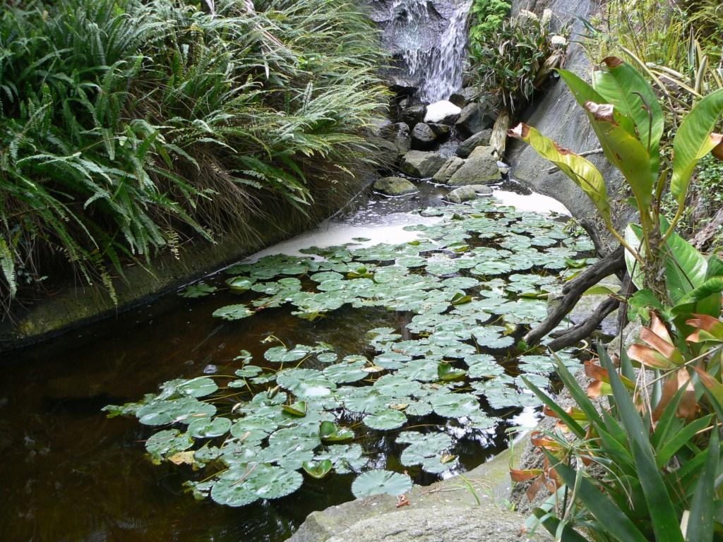 san_diego_botanc_garden_2.JPG