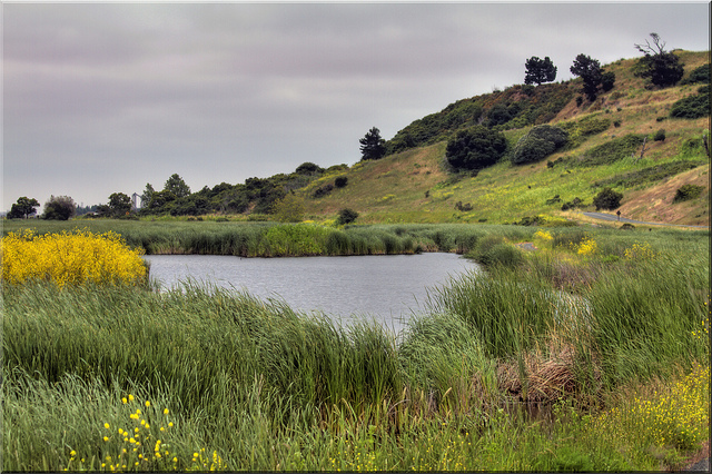 Coyote-Hills-Regional-Park.jpg