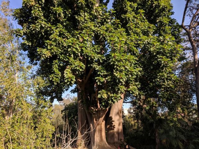 fullerton-arboretum-11.jpg