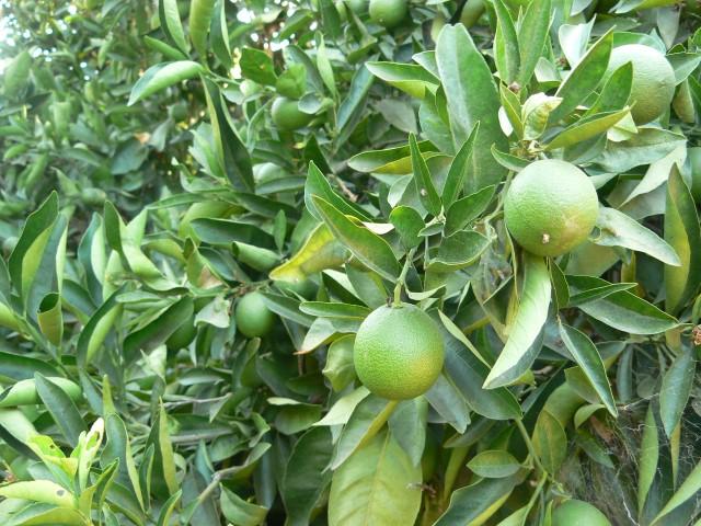 fullerton-arboretum-7.JPG