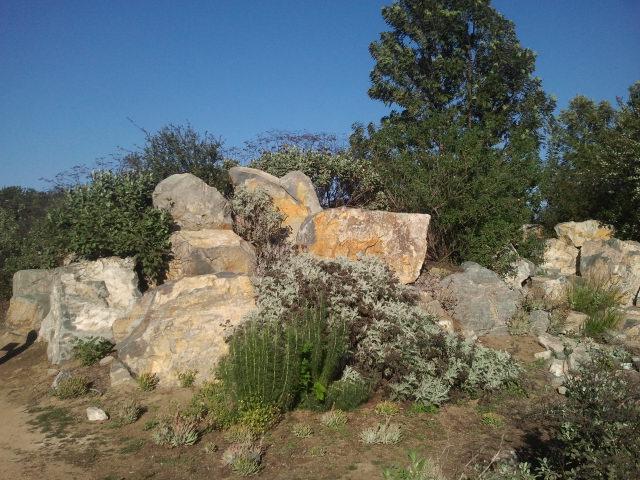 fullerton-arboretum-8.jpg
