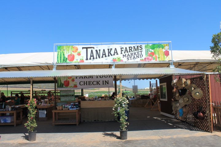 tanaka-farm-12.JPG