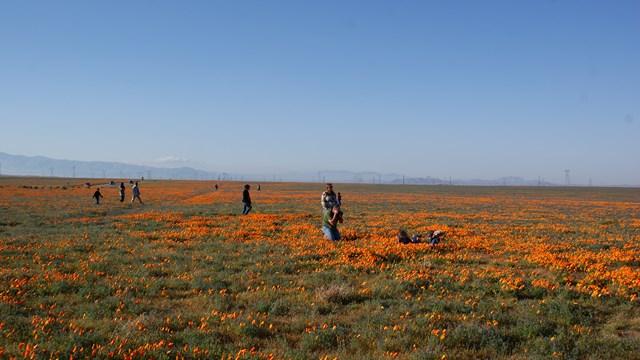 poppy-reserve1.jpg