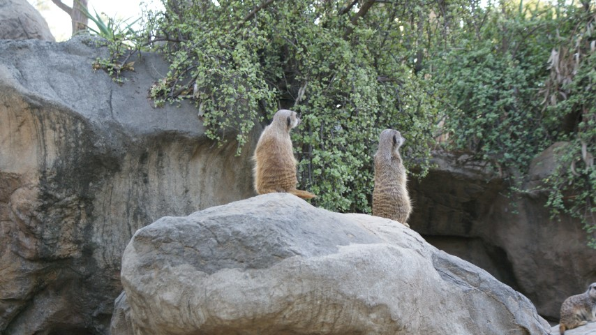 la-zoo13.JPG