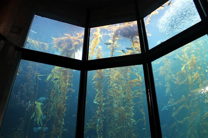 monterey-aquarium1.JPG
