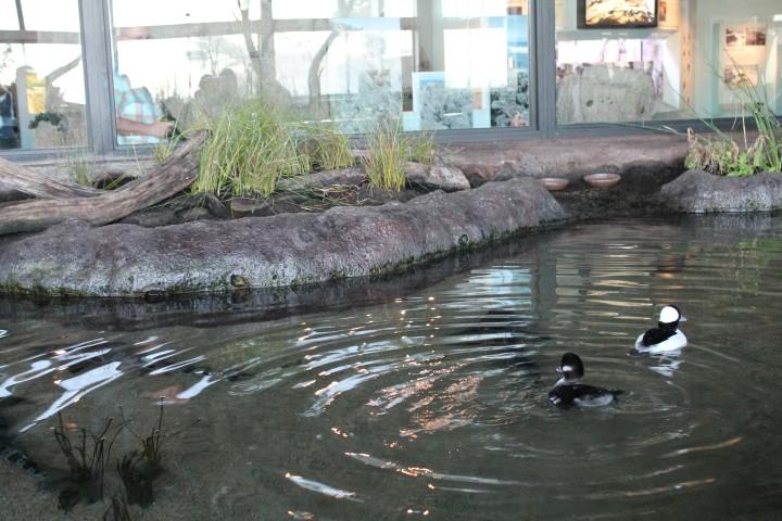 monterey-aquarium2.JPG
