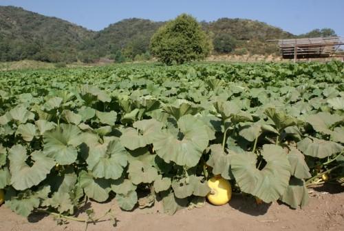 rileys_farm18.JPG