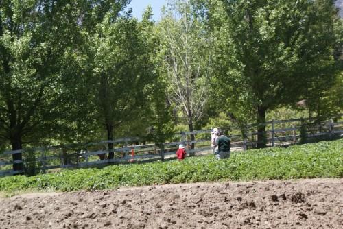 rileys_farm8.JPG