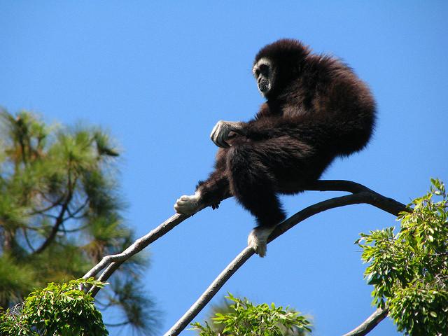 Oakland-Zoo-4.jpg