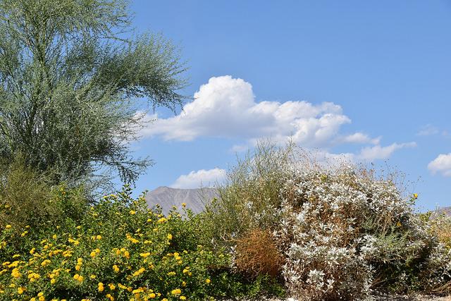 living-desert3.jpg
