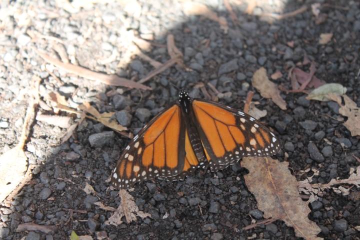 Butterfly-Grove11.JPG