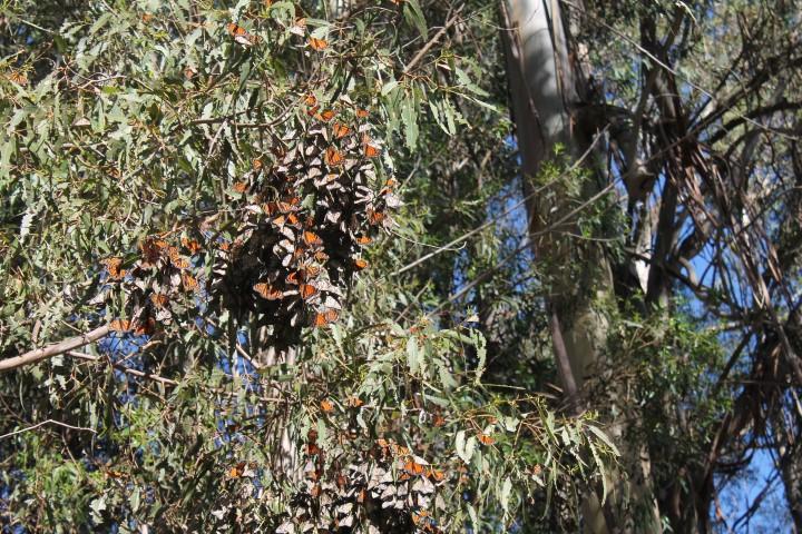 Butterfly-Grove13.JPG