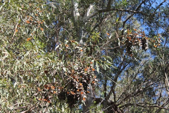 Butterfly-Grove17.JPG