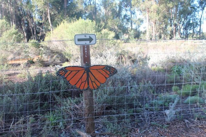 Butterfly-Grove2.JPG