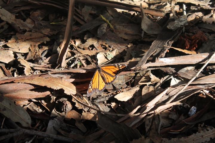 Butterfly-Grove6.JPG