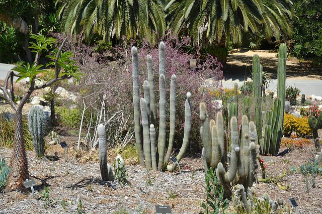 South-Coast-Botanic-Garden-03.jpg