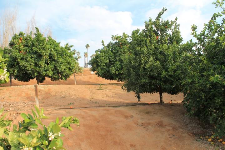california-citrus-park-04.JPG