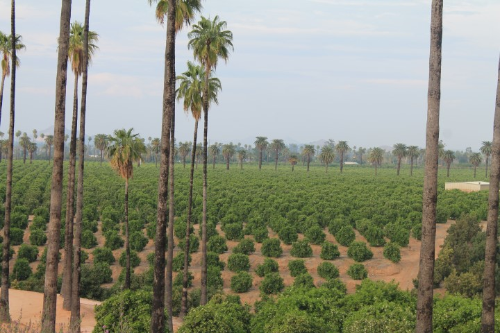 california-citrus-park-05.JPG