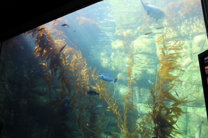 birch-aquarium2.JPG
