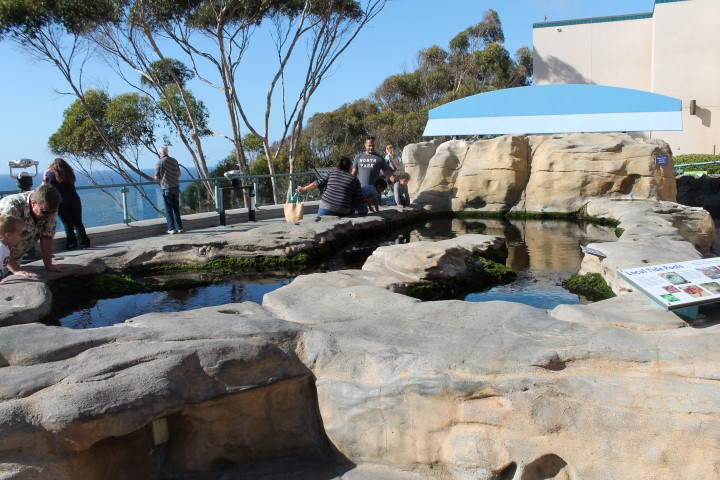 birch-aquarium4.JPG