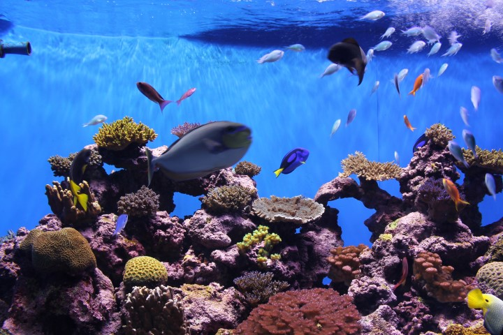 birch-aquarium5.JPG