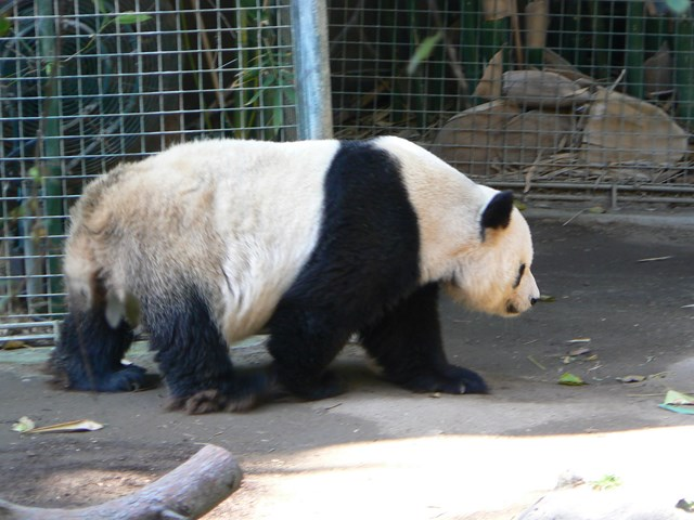 san-diego-zoo-01.jpg