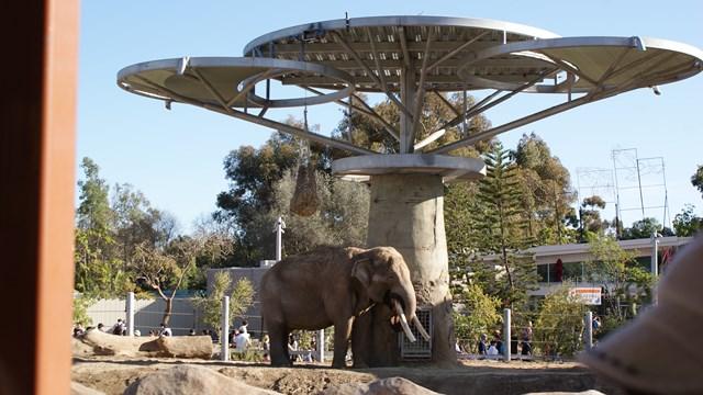 san-diego-zoo-02.jpg
