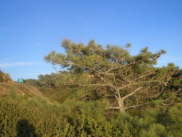torrey-pines6.JPG