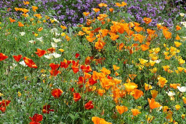 san-francisco-botanic-garden-1.jpg