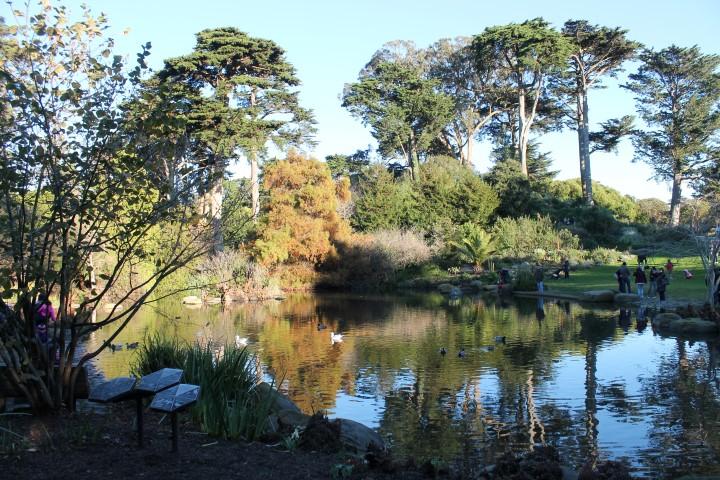 san-francisco-botanic-garden3.JPG